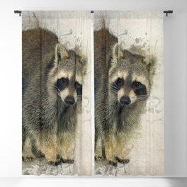 Raccoon Blackout Curtain