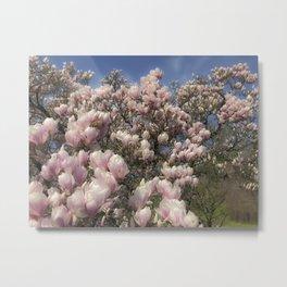 Magnolia splendor Metal Print
