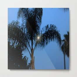 Moonlight through the Palms, Southern California Metal Print