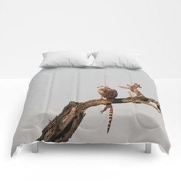 Hawk Eagle with its Catch Comforters