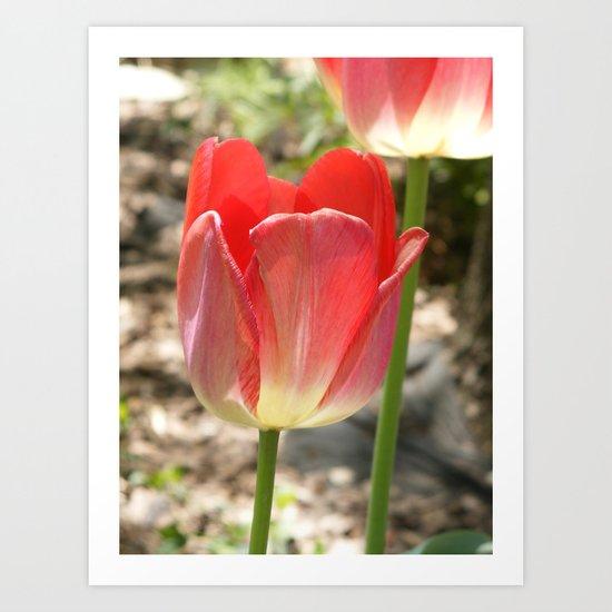 Transparent Tulip Art Print