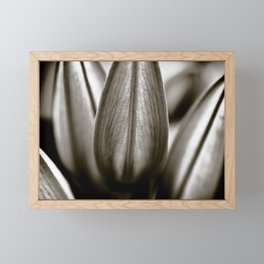 Black And White Lily Buds Framed Mini Art Print