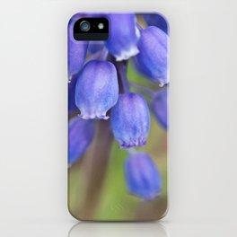 Grape Hyacinths blue (2) iPhone Case