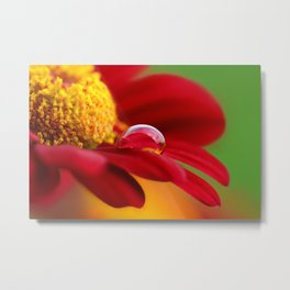 Red flower with water drop 213 Metal Print