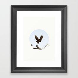 Wedge-Tailed Eagle (Aquila audax fleayi) Framed Art Print