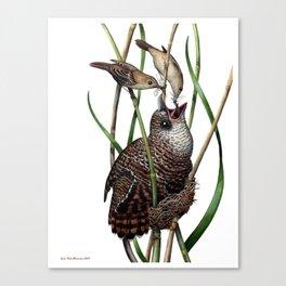 Baby Bird I Canvas Print