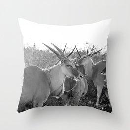 Herd of Eland stand in tall grass in African savanna Throw Pillow