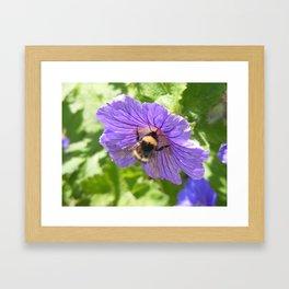 Purple Pollen Framed Art Print