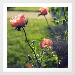 Poppies in the Afternoon Art Print