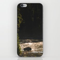 Yellowstone National Park - Bison  iPhone & iPod Skin