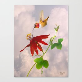 Rufous Hummingbird and Passion Flower Canvas Print