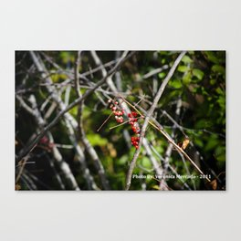 The Berry Bunch Canvas Print