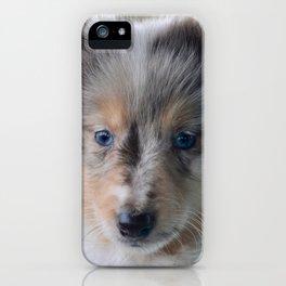 Blue-eyed Portrait of a Shetland Sheepdog Puppy iPhone Case