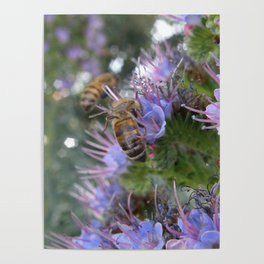 Bees on Buddleia Poster