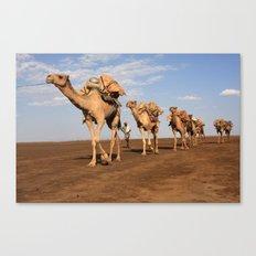 Camel Caravan Canvas Print