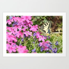 Little butterfly Art Print