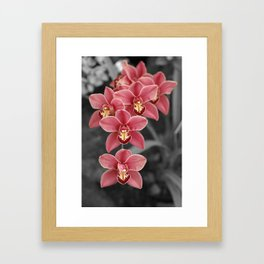 Cymbidium Orchid Framed Art Print