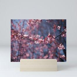 Cherry blossoms II Mini Art Print