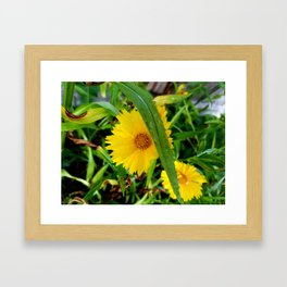 Fresh Dew Framed Art Print