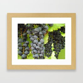 Harvest Ready! Framed Art Print