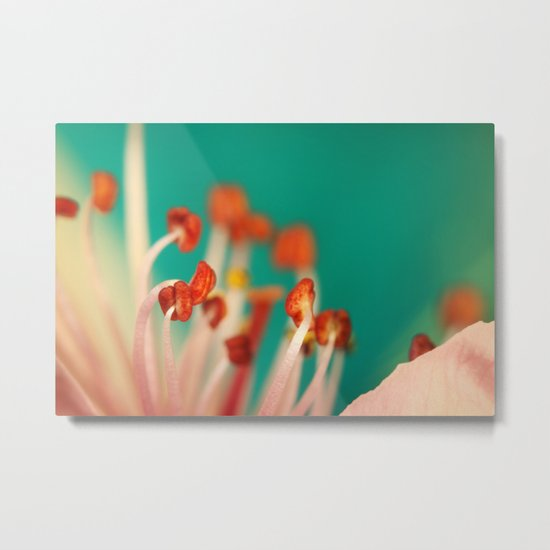 First Blossom Metal Print