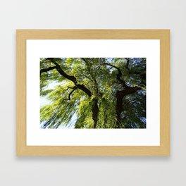 Weepings Willows Framed Art Print