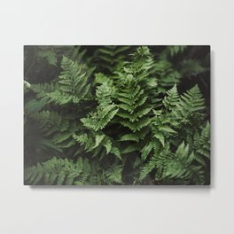 Bunches Of Green Fern Leaf Metal Print