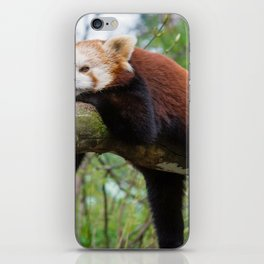 Extremely Cute Little Red Panda Sleeping Lenghtways Tree Branch Close Up Ultra HD iPhone Skin