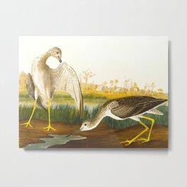 Tell-tale Godwit, or Snipe Bird Metal Print