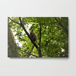 Peek a boo Squirrel Metal Print