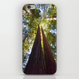 California Redwoods iPhone Skin