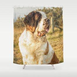 St Bernard dog in the sunset Shower Curtain