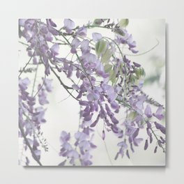Wisteria Lavender Metal Print