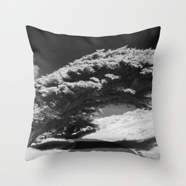 Bending Cypress Black and White Photographic Picture Throw Pillow