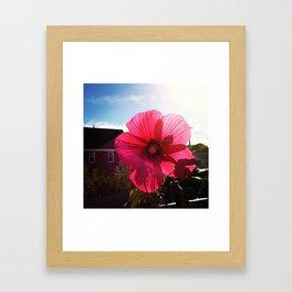 happy hibiscus  Framed Art Print
