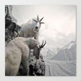Hi, we are the mountain goats Canvas Print