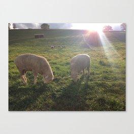 Sheepies Canvas Print