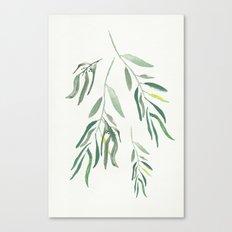 Eucalyptus Branches II Canvas Print