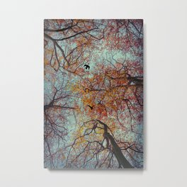 Trees In Fall Metal Print