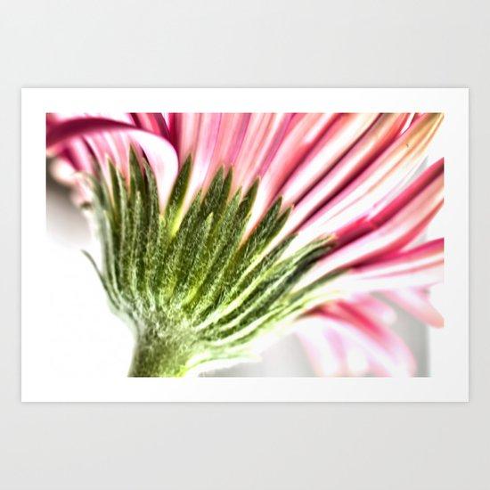 Pink Gerbera 6 Art Print