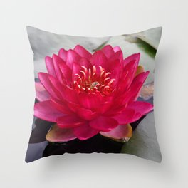 Red Waterlily Burgundy Princess Throw Pillow