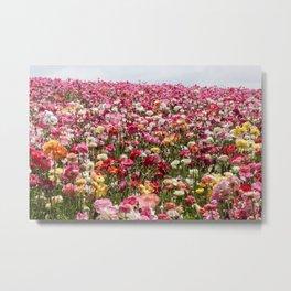 Carlsbad Flower Fields Metal Print