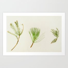 Conifer Study Art Print