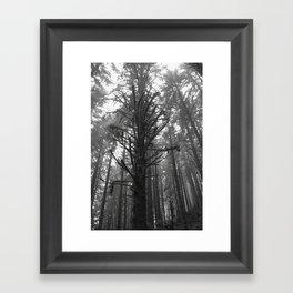 Forrest Mist - Redwood National Park Framed Art Print