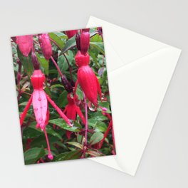 Fuchsia flower after rain Stationery Cards