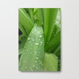 Raindrops on Grasses  Metal Print