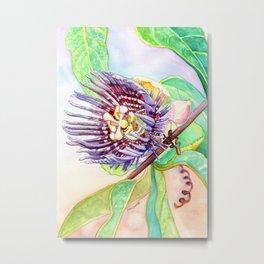 Passiflora #3 Metal Print