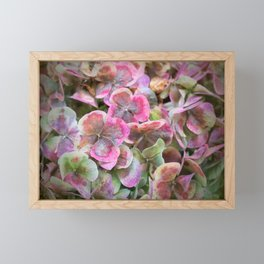 Faded Hydrangea Framed Mini Art Print