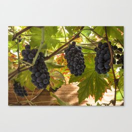 Fruits of the vine  Canvas Print