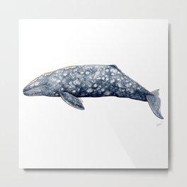 Grey whale Metal Print